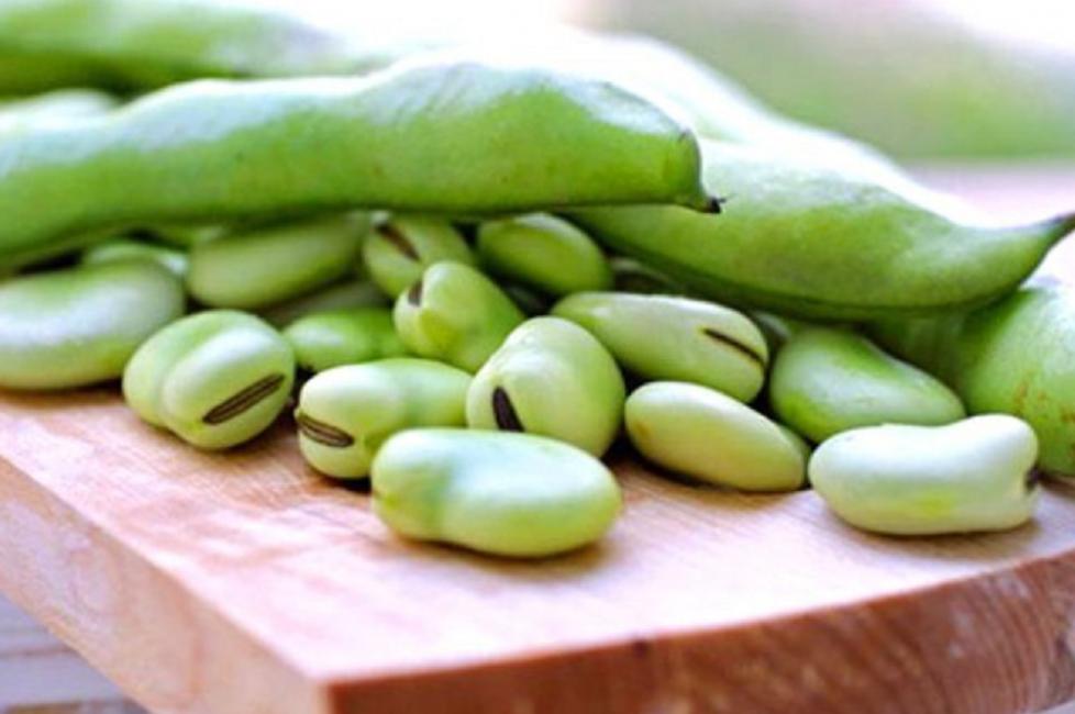 Что такое фасоль: овощ или нет, как выглядит растение, описание и семейство – сад и огород своими руками