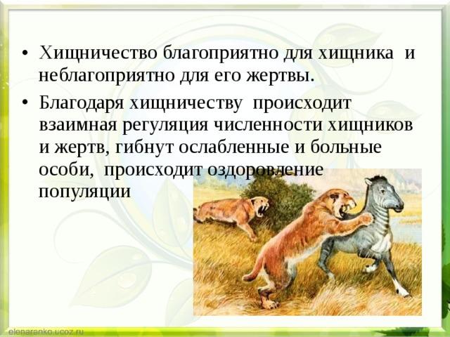 Что такое хищничество? основные характеристики / биология | thpanorama - сделайте себя лучше уже сегодня!