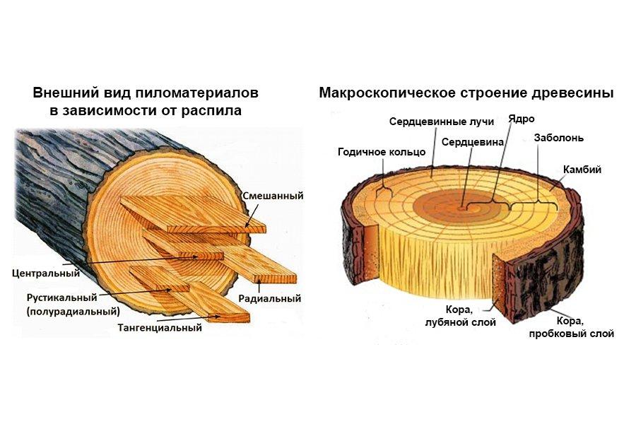 Древесина — википедия. что такое древесина
