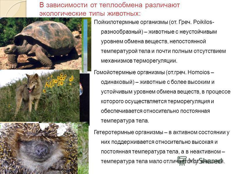 Гомойотермные животные. виды, названия и описание гомойотермных животных   животный мир