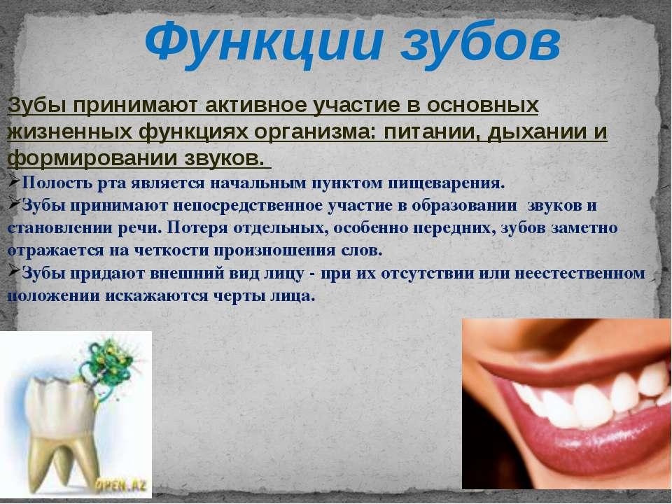 Зубы человека — википедия. что такое зубы человека