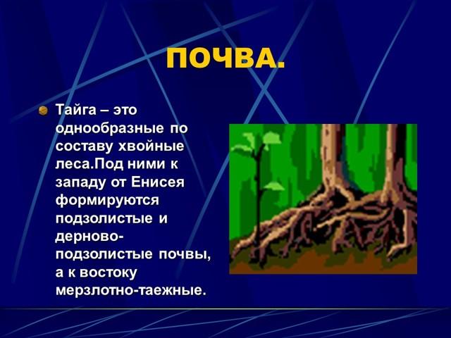 Тайга россии