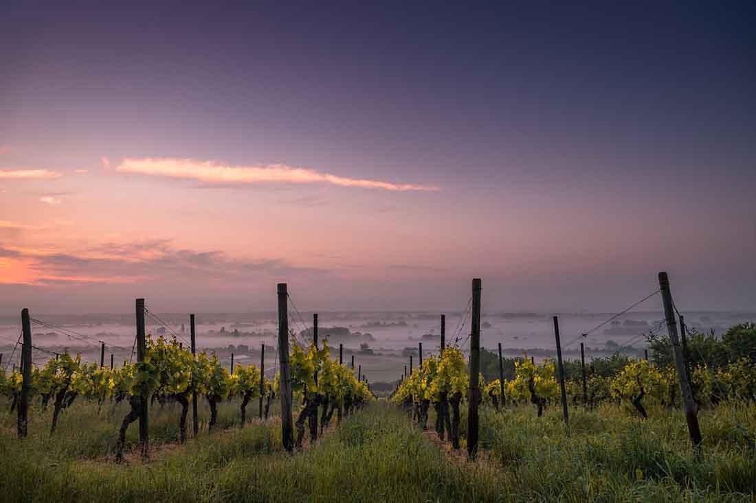 Географическое вино-что означает, чем отличается от столового