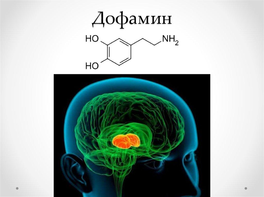 Дофамин википедия