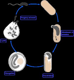 Что такое паразиты: виды, жизненный цикл и классификация