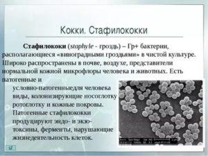 Стафилококк во рту: симптомы, способы лечения, фото
