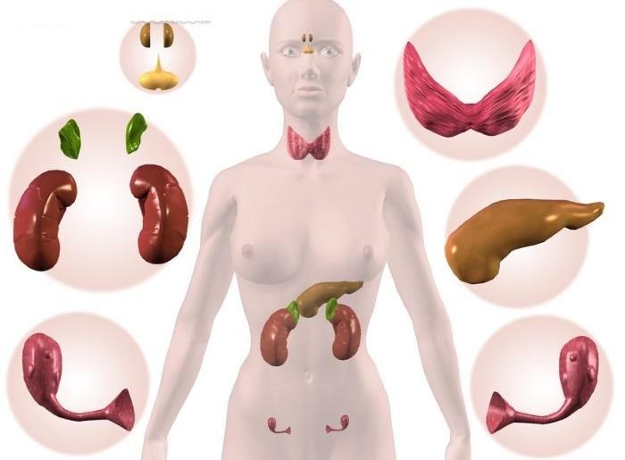 12 главных женских гормонов: название, функции в организме. женские гормоны в мужском организме, мужские гормоны в женском организме: описание