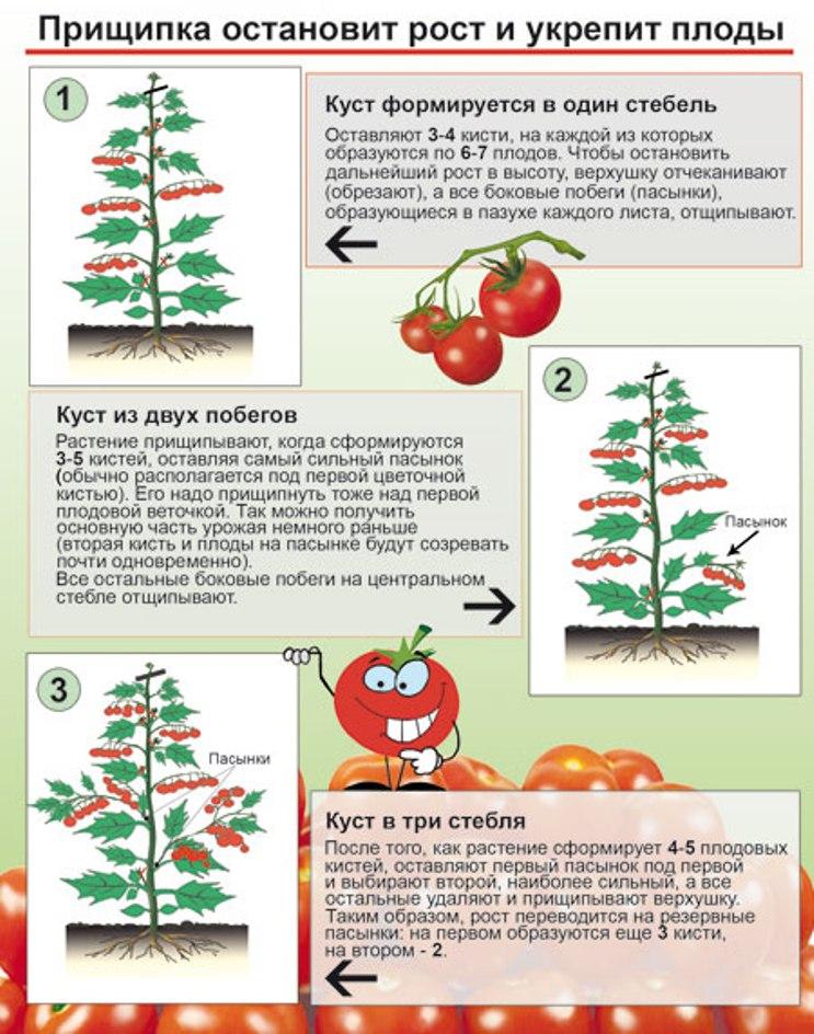Пасынкование помидор в теплице и в открытом грунте