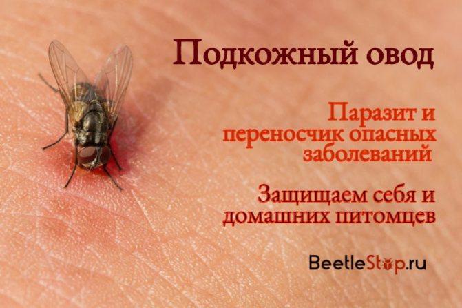 Кто такие паразиты в биологии: определение и их симптомы у человека