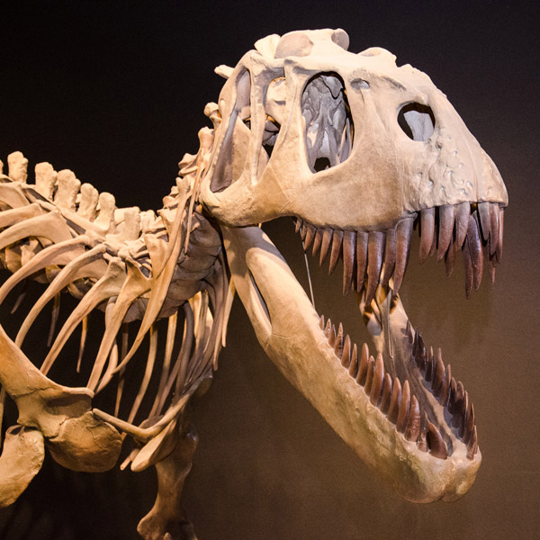 Палеонтология - это какая наука? что изучает палеонтология?