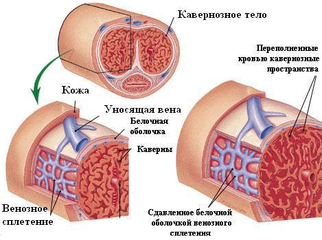 Устройство и принцип работы насоса системы охлаждения двигателя (помпы)