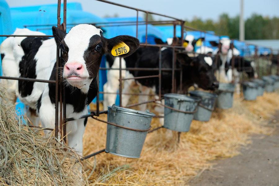 Животноводство что это? значение слова животноводство