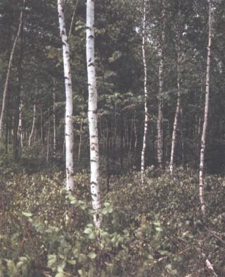 Экология | энциклопедия кругосвет