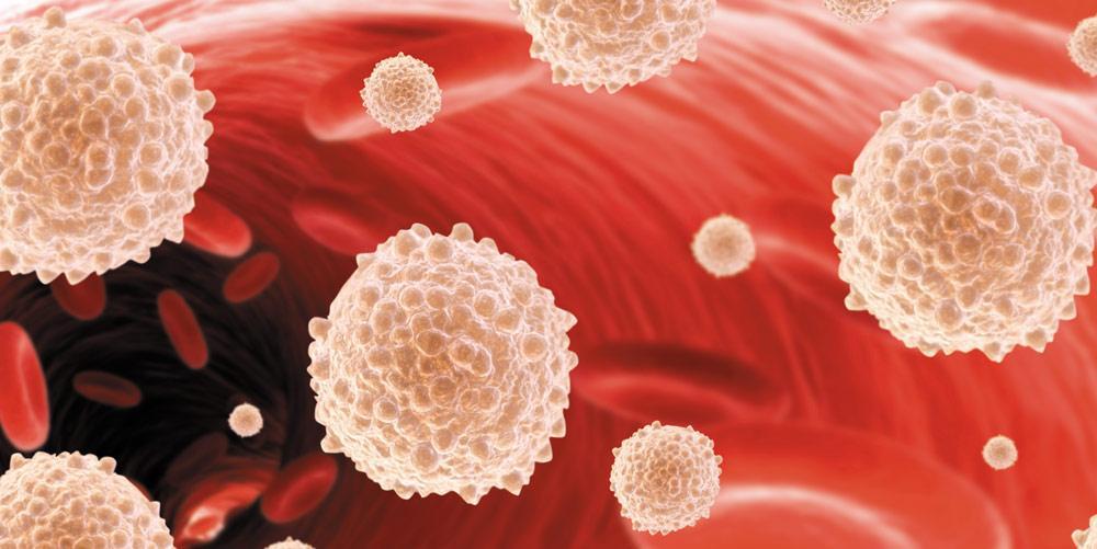 Содержание лейкоцитов в крови. нормы содержания, причины повышенных и пониженных показателей