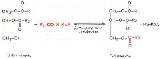 Тг16 — википедия. что такое тг16