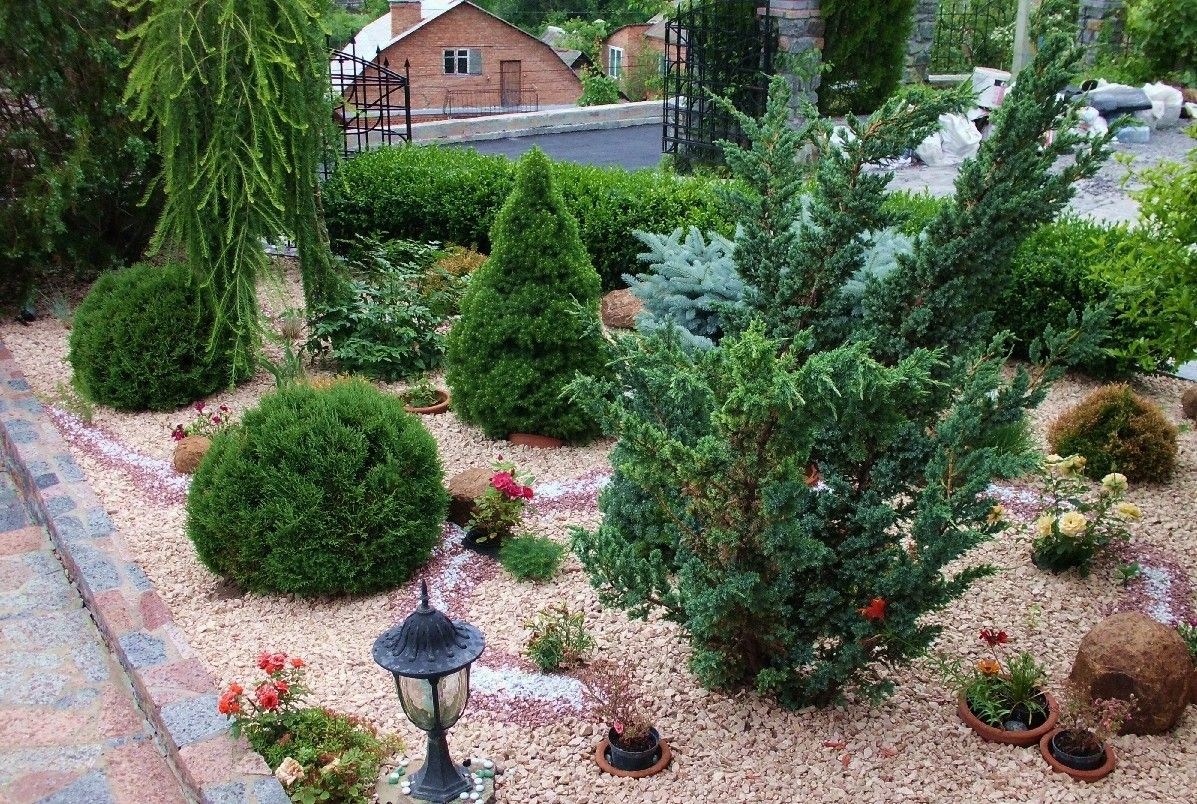 Хвойные растения для небольшого участка | в цветнике (огород.ru)