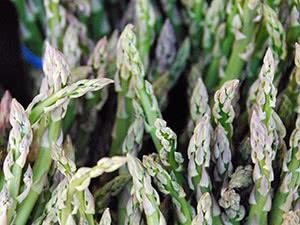 Спаржа: что за растение, калорийность, как приготовить, польза и вред