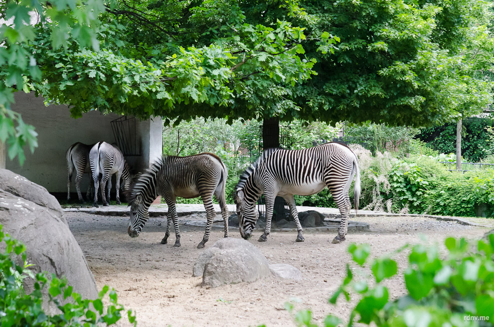 Животные московского зоопарка: численность, названия, фото