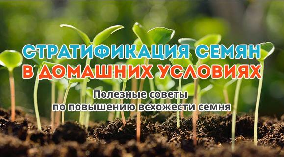 Cтратификация семян - что это, как провести ее в домашних условиях