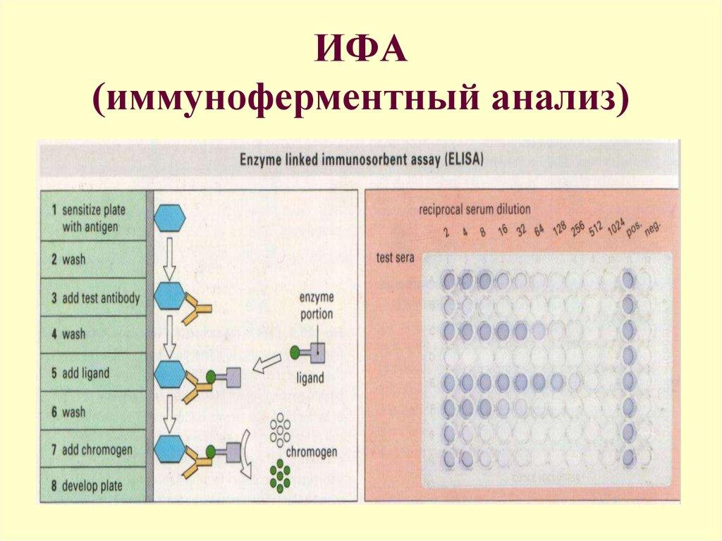 Анализ ифа на сифилис - подробное описание в полном обзоре
