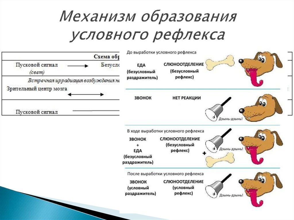 Синдром собаки павлова что это такое