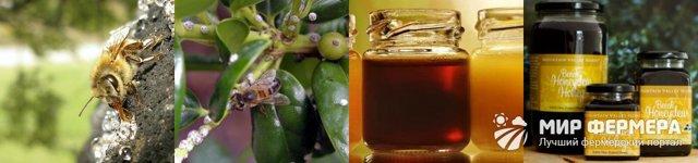 Падевый мед: что это такое, польза и вред, как отличить, противопоказания