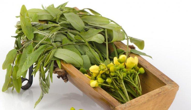 Сенна александрийская, или александрийский лист: описание и свойства растения
