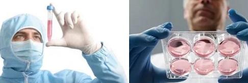 Что такое стволовые клетки и как их получают?