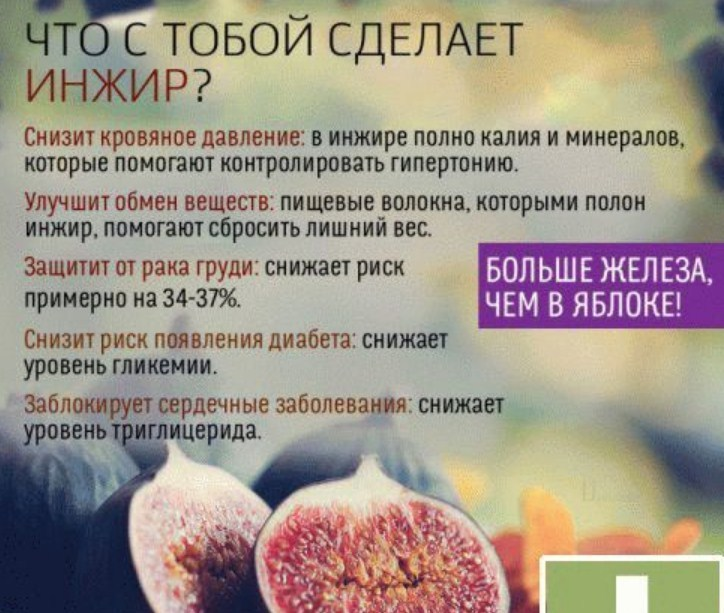 Инжир: польза и вред, лечение свежими, сушеными плодами и листьями, лекарственные и кулинарные рецепты из смоковницы + отзывы