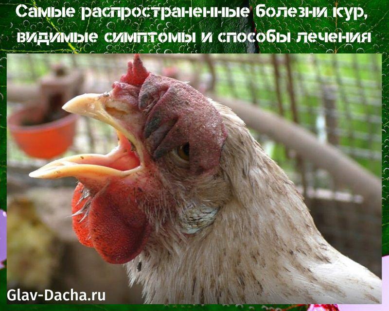 Значение слова «курица»