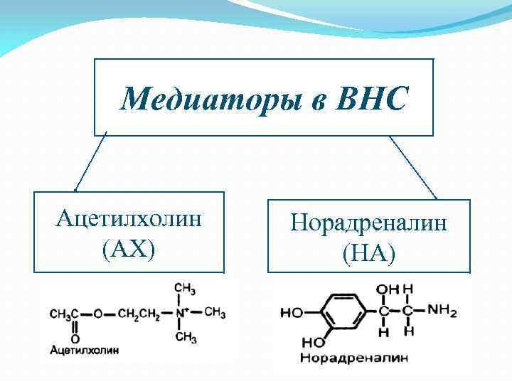 Ацетилхолин — большая медицинская энциклопедия