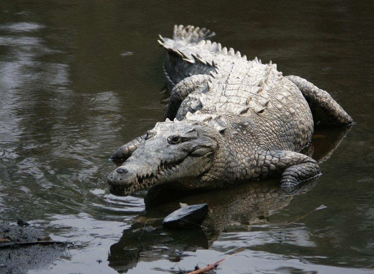 Игра «крокодил»: смешные слова скачать бесплатно — женский сайт краснодара women93.ru, новости, афиша, мероприятия