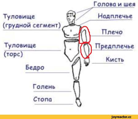 """Где находится голень у человека - """"добрый-совет.ru"""""""