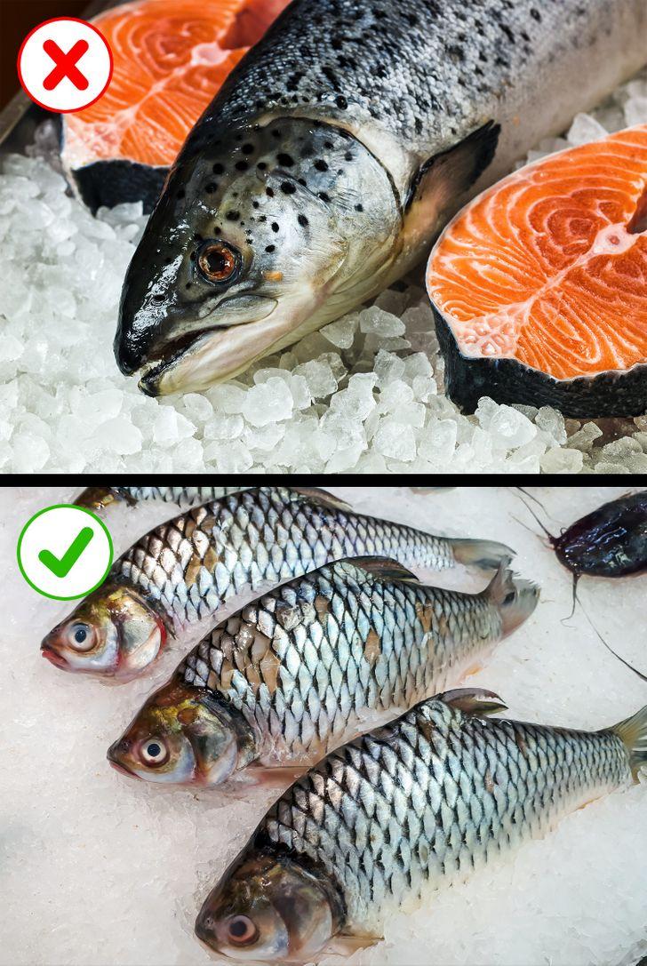 Красная рыба кета с фото и описанием