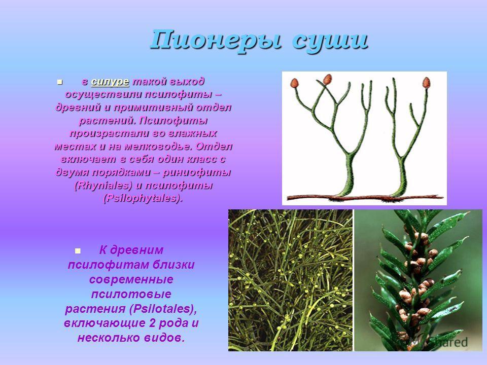 Высшие растения. высшие споровые растения. общая характеристика. отдел риниофиты. отдел псилофиты. отдел мохообразные. отдел плаунообразные. отдел хвощеобразные и отдел папоротникообразные