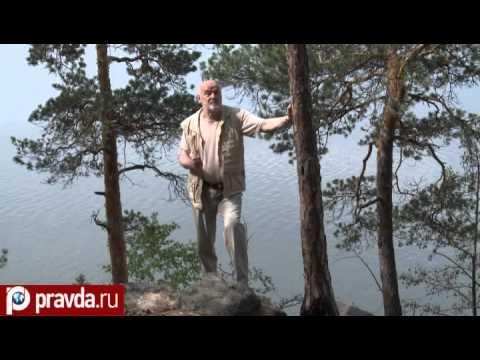 Рили креветки: содержание и уход, чем кормить и совместимость с рыбами - ribulki.ru