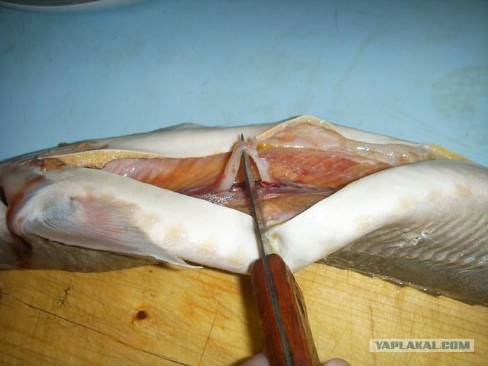 Что такое визига, как ее удалить из рыбы? | zdavnews.ru | zdavnews.ru
