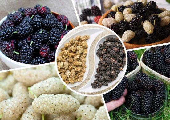 Шелковица: фото, описание сортов, полезные свойства ягод - sadovnikam.ru