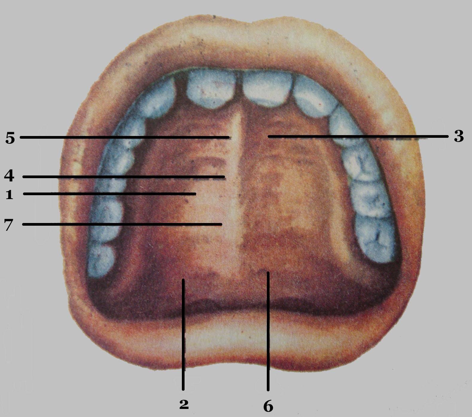 Лёгочная альвеола — википедия с видео // wiki 2