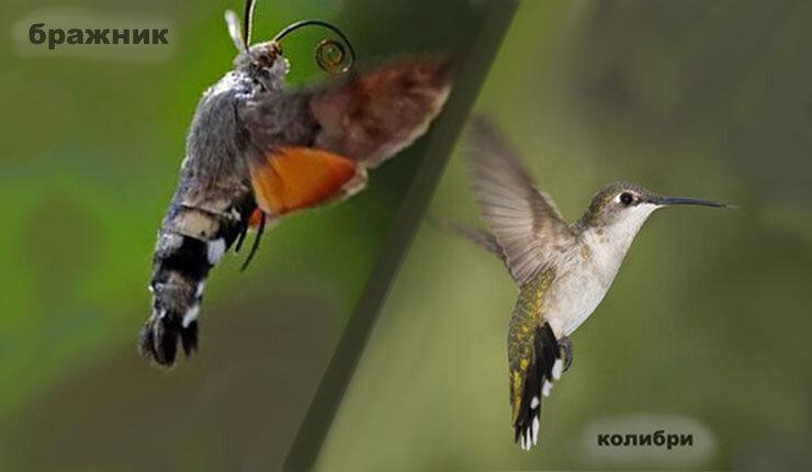 Что символизирует разноцветная колибри