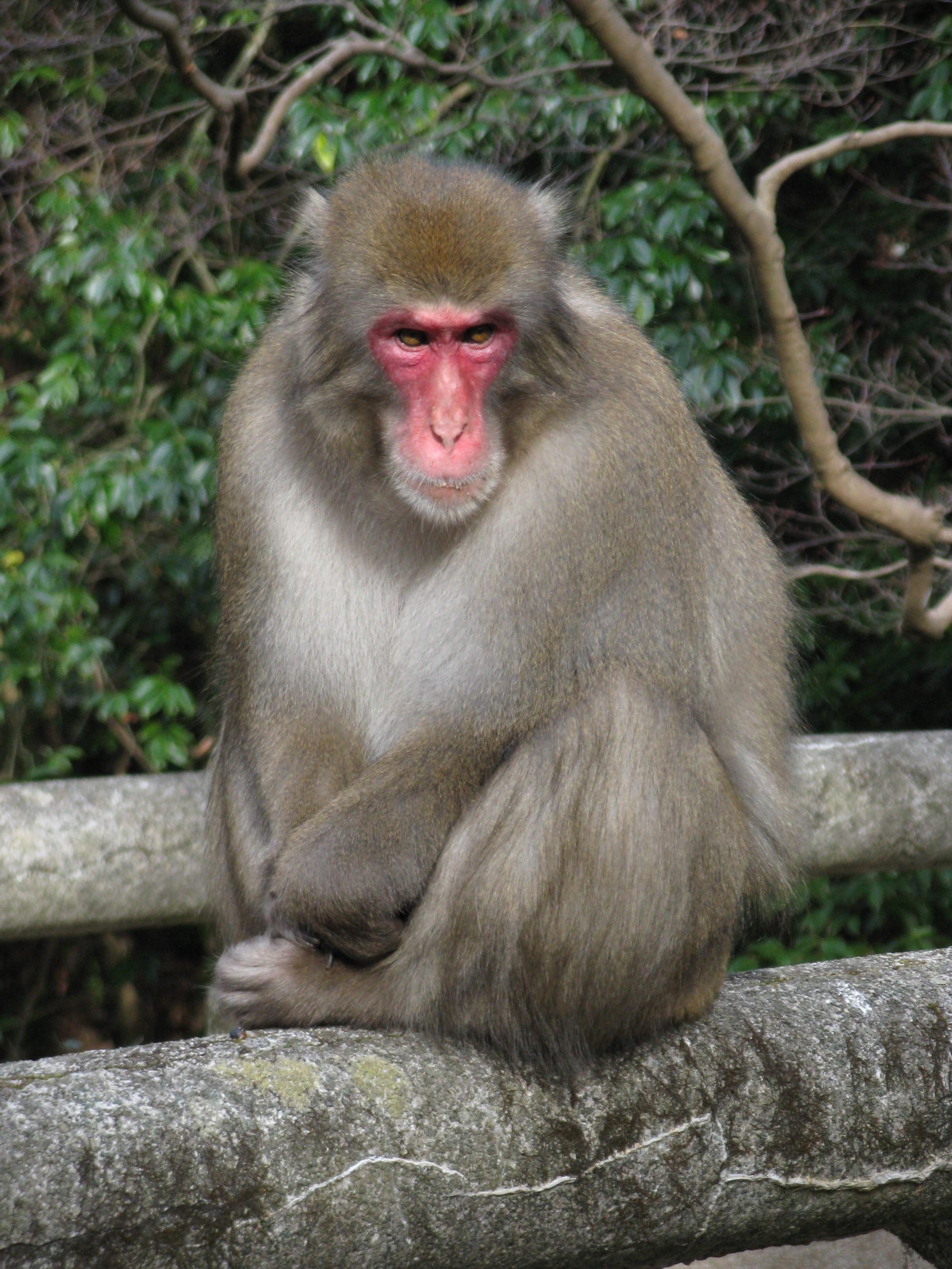 Обезьяны - виды с фото и названиями | список обезьян с описанием