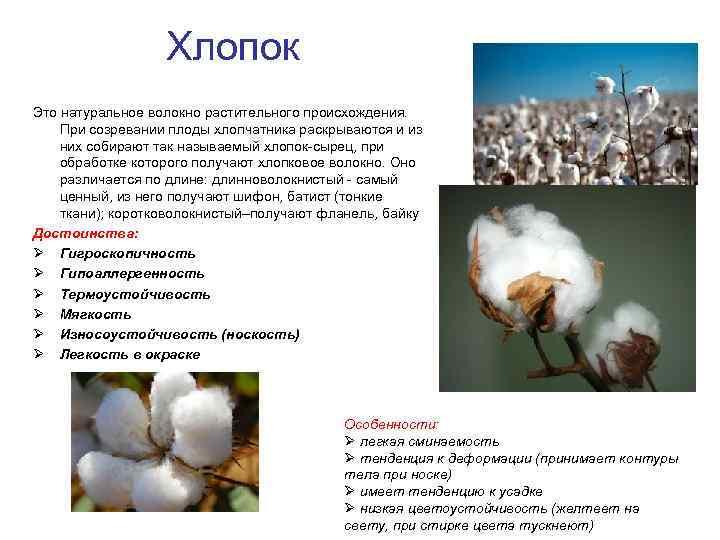 Насколько органический хлопок экологичен на самом деле | vogue russia
