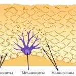 Как увеличить меланин в организме: список продуктов, препаратов и других средств