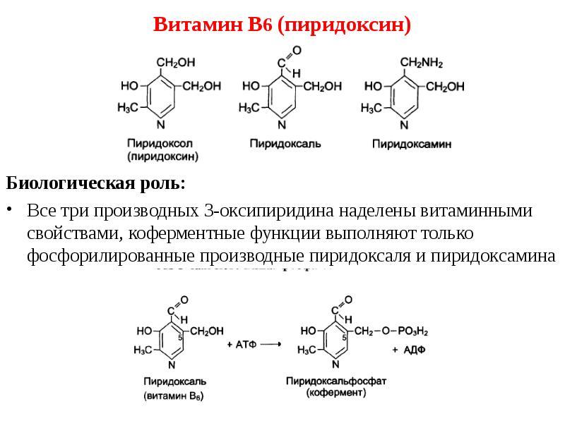 Витамин b6 (пиридоксин): важные свойства, польза и вред для организма
