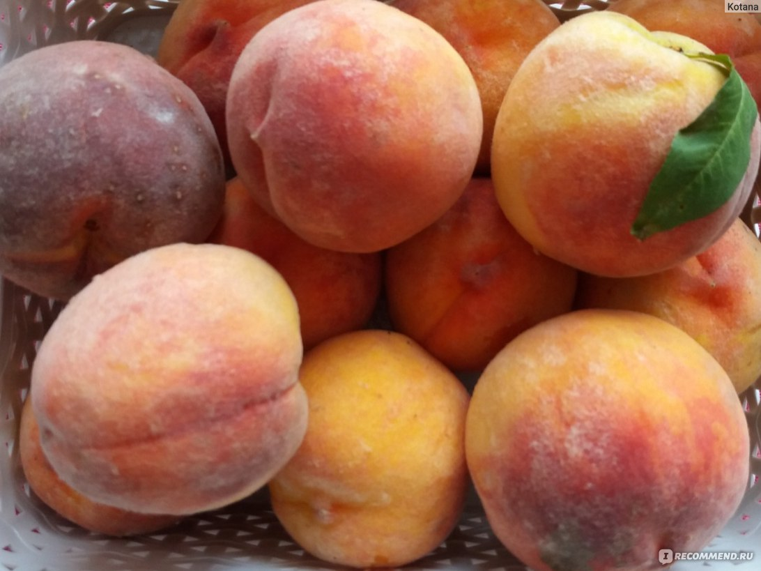 Персик — выращивание, размножение, болезни и разновидности + 81 фото