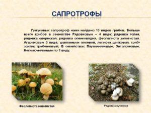 Стафилококк сапрофитный