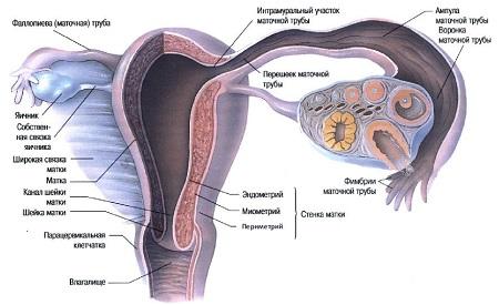 Эндометрит, что это такое? симптомы и лечение