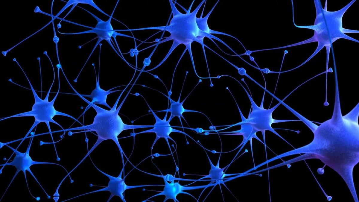 Нейроны – что это. виды и функции нейронов головного мозга