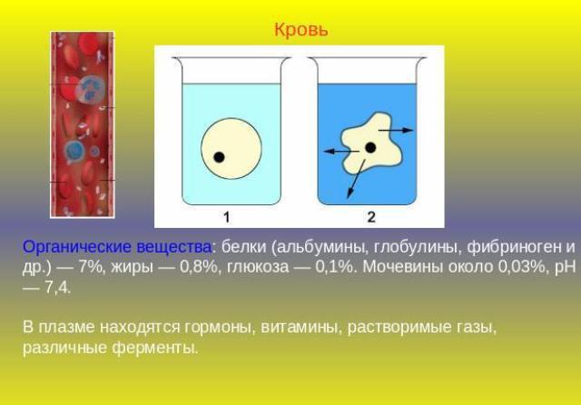 - альбумины - биохимия