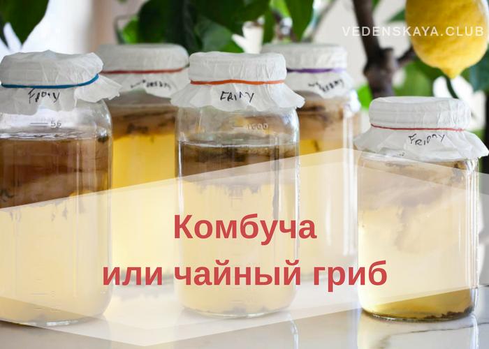 Комбуча: применение и эффективность при различных заболеваниях
